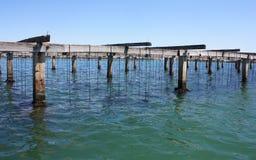 Uprawia ziemię na kultywaci mussels w Śródziemnomorskim Zdjęcie Royalty Free