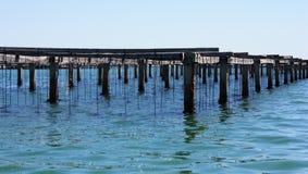 Uprawia ziemię na kultywaci mussels w Śródziemnomorskim Obraz Royalty Free