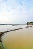 uprawia ziemię najpierw robi ryżu krokowi zdjęcie stock