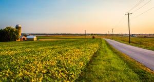 Uprawia ziemię wzdłuż wiejskiej drogi w wiejskim Jork okręgu administracyjnym, Pennsylwania Obraz Royalty Free