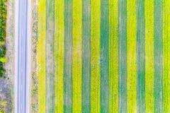 Uprawia? ziemi? poj?cie Colza pole wzdłuż wiejskiej drogi Kreatywnie rolnictwo zdjęcia royalty free