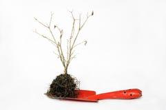 Uprawiający ogródek łopatę i suszy drzewa Zdjęcia Royalty Free