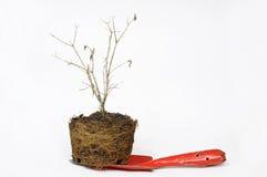 Uprawiający ogródek łopatę i suszy drzewa Obrazy Royalty Free