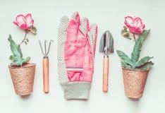 Uprawiający ogródek wytłacza wzory ustalonego układ z rośliną, kwiatu garnkiem i menchii rękawiczkami, odgórny widok Zdjęcie Royalty Free