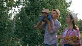 Uprawiający ziemię, mali chłopiec pomocy rodzice zbierać przy jabłkiem uprawiają ogródek zbiory