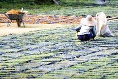 uprawowej trawę ornamentacyjny pracownika Fotografia Stock