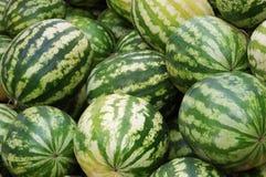 uprawy melonów woda Obrazy Royalty Free