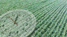 Uprawy pole z zegarem zdjęcie wideo
