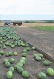 uprawy śródpolna melonów woda Obraz Stock