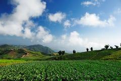 Uprawy w polu przygotowywającym dla żniwa w wiejskim Chiny Zdjęcie Stock