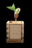 uprawy winorośli fasolki Obrazy Stock