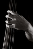 Upright bass. Male left hand on neck of upright bass Royalty Free Stock Images