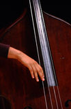 Upright. The Elegance of upright bass Royalty Free Stock Photography