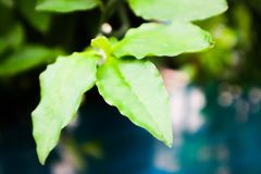 Uprisen angle view green leaf in park royalty free stock photos