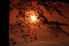Uprising Sun behind the trees Stock Image