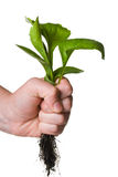 Uproot weed Stock Photos