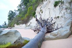 Uprooted Fallen Tree with Sedimentary Limestone Cliffs at Sandy Beach with Trees - Sitapur, Neil Island, Andaman Islands, India stock photo