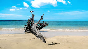 Uprooted tree on a beach. 2004 Indian Ocean Tsunami uprooted tree at Andaman Beach, Wandoor, Port Blair, Andaman and Nicobar Islands, India, Asia Royalty Free Stock Photos