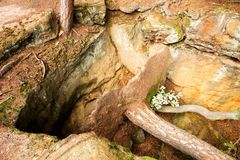Uprooted tree Royalty Free Stock Photography