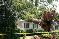 Uprooted tree Royalty Free Stock Images