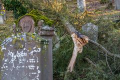 Uprooted tree at old Jewish cemetery with weathered tombstones, Germany.  Stock Images