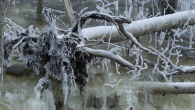 An uprooted tree in the river of Lahemma. The tree with covered snow is on the top of the river stock footage