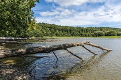 Uprooted tree trunks in the lake Stock Images