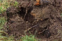 Uprooted tree after a windstorm, close up. An uprooted tree after a windstorm, close up, environment, weather, climate change Stock Images