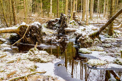 uprooted trees Fotografering för Bildbyråer
