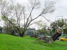 Uprooted trees on The Strand, Townsville, Australia after Cyclon Stock Image