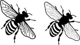 Uproszczona realistyczna miodowa pszczoła dwa wersji skrzydłowa delikatność - monochrom - obraz royalty free