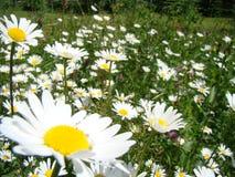Ups-a-daisy! royalty free stock photo