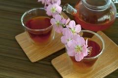 Сups of tea with blossom branch. Сups of tea with blossom pink flowers cherry branch. Selective focus Stock Photos