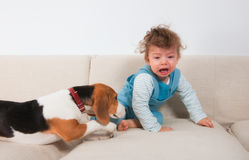 Upset baby boy and his pet Stock Images