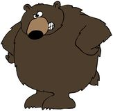 Upset Bear Stock Image