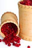 Upset container with cowberry Royalty Free Stock Image