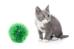 Upset kitten Royalty Free Stock Images