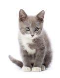 Upset kitten Stock Photos