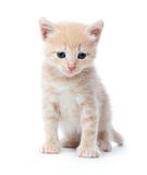 Upset kitten Stock Photo