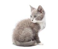 Upset kitten on white Royalty Free Stock Photography