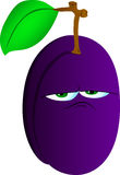 Upset plum Stock Images