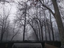 Upshot of a forest as mist rolls in stock photo