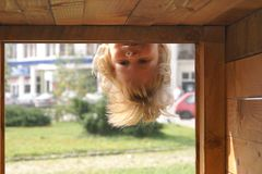 Upside down. Two year old girl having fun upside-down in the playground Stock Photos
