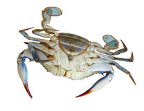 Upside down Crab Stock Photo