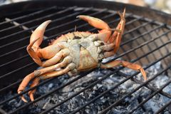 Upside down crab on a grill Stock Photography