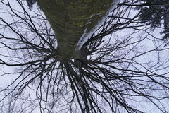 Upside Down. A different view of an otherwise normal looking tree Royalty Free Stock Photography