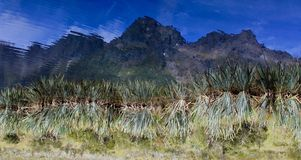 REFLECTION OF THE FIORDLAND MOUNTAINS IN THE BANKS OF MIRROR LAKE NEW ZEALAND. This is an upside down image of the banks of Mirror Lake in the Fiordland National Royalty Free Stock Images