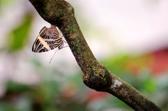 Upside down mosaic butterfly holding onto a tree Stock Photo