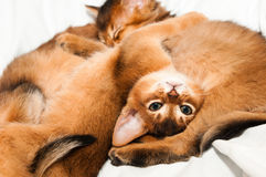 Upside down portrait of kitten Stock Photography