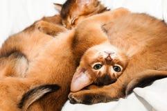 Upside down portrait of kitten Stock Photography